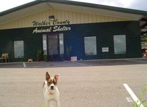 Walker Co Animal Shelter
