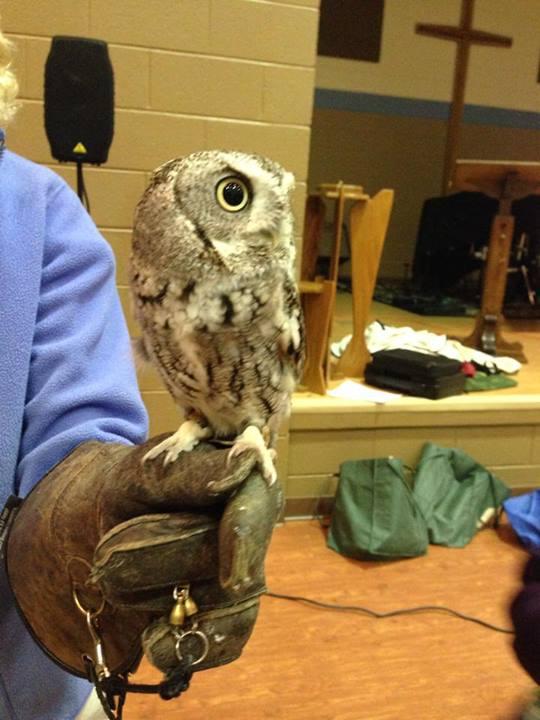 SOAR Raptor Show Owl