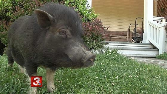 Not The Same Pig / WRCB