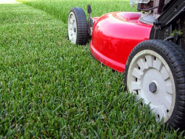 Landscaping Services In Staten Island