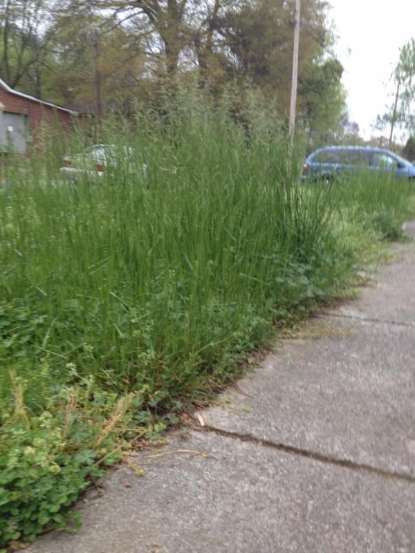 South Steele St High Grass