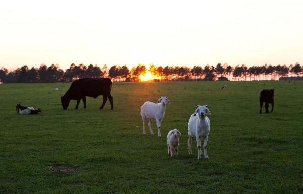 White Oak Pastures for Bitter Southerner