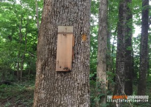 Recreation Trail Birdhouses Vandalized