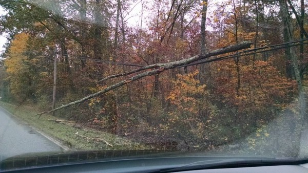 Roundpond Rd Tree Down