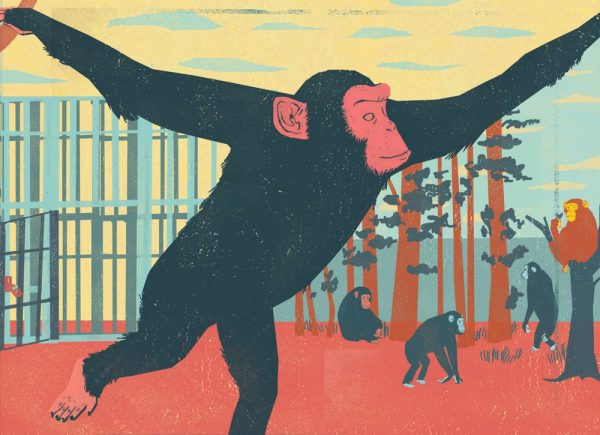 Retired Chimpanzee / Atlanta Magazine - Simone Shin